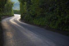 Изгибать проселочную дорогу через толстый лес стоковые фотографии rf