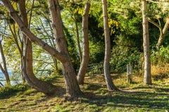 Изгибать сцену деревьев стоковые фотографии rf