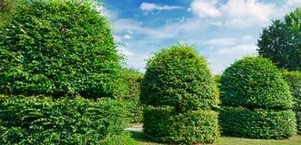Изгороди и орнаментальный кустарник в лете паркуют Широкое фото Стоковое Изображение RF