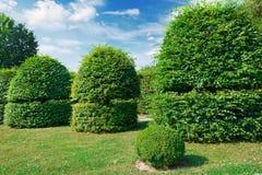 Изгороди и орнаментальный кустарник в лете паркуют Стоковые Изображения