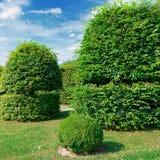 Изгороди и орнаментальный кустарник в лете паркуют Стоковые Изображения RF