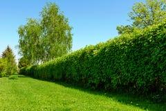 Изгородь в саде стоковые фото