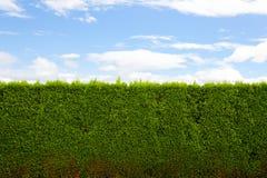 изгородь горизонтальная Стоковая Фотография