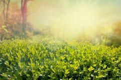 изгородь дня солнечная стоковые фотографии rf