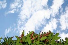 изгородь смотря сверх Стоковые Фотографии RF