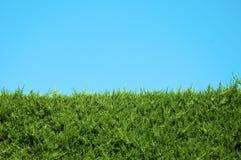 изгородь Стоковая Фотография RF