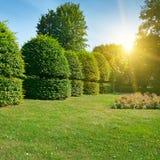 Изгороди и орнаментальный кустарник в лете паркуют Стоковое Изображение RF