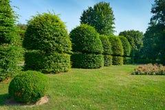 Изгороди и орнаментальный кустарник в парке лета Стоковое Изображение RF