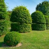 Изгороди и орнаментальный кустарник в парке лета Стоковые Изображения RF