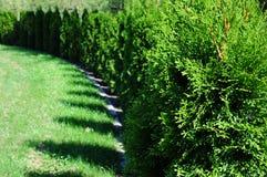 Изгородь в парке Стоковое Изображение