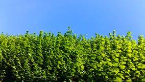 Изгородь и небо Стоковое Фото