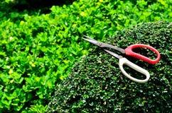 Изгородь утески садовника в дереве Стоковая Фотография