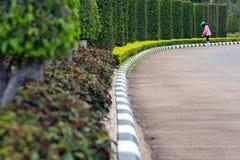 Изгородь утески садовника Стоковое Фото