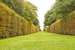 Изгородь цвета падения multi и путь прогулки зеленой травы в саде Стоковые Изображения RF