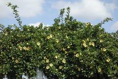 Изгородь цветков стоковое изображение rf