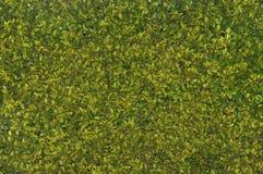 изгородь Стоковые Фото