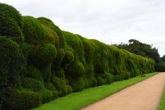 Изгородь Wibbly шаткая, дом Montacute, Сомерсет, Англия стоковое фото
