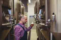 Изготовитель смотря стекло пива в винзаводе Стоковые Фотографии RF