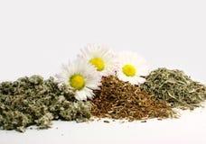 излечивать травы Стоковые Фотографии RF