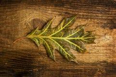 излишек листьев доски осени старый Стоковые Фотографии RF