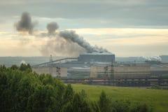 Излучения завода за зелеными лугом и лесом Стоковое Изображение RF