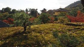 Изменение Киото Япония цвета листьев Стоковые Изображения