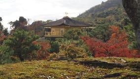 Изменение Киото Япония цвета листьев Стоковое Изображение RF