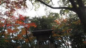 Изменение Киото Япония цвета листьев стоковое фото rf