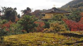 Изменение Киото Япония цвета листьев Стоковое Фото