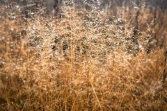 Изменение концепции сезонов: капельки на увяданной желтой траве, тростники тумана в последнем утре осени стоковые изображения rf