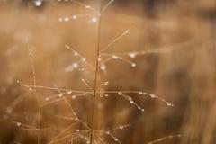 Изменение концепции сезонов: капельки на увяданной желтой траве, тростники тумана в последнем утре осени стоковое фото