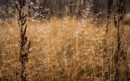Изменение концепции сезонов: капельки на увяданной желтой траве, тростники тумана в последнем утре осени стоковые фото