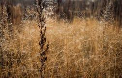 Изменение концепции сезонов: капельки на увяданной желтой траве, тростники тумана в последнем утре осени стоковая фотография