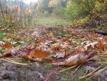 Изменение сезона Gatineau Стоковые Фотографии RF