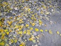 Изменение сезонов путем леса стоковое изображение