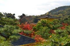 Изменение цвета листьев в Японии стоковая фотография rf