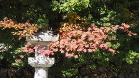 Изменение цвета листьев в Японии стоковые фото