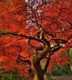 измените листья Стоковые Изображения