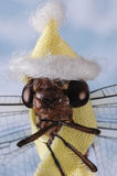измените муху дракона климата Стоковая Фотография RF