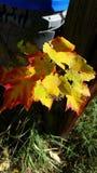 Изменять листьев падения Стоковое Изображение