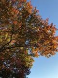 Изменять листьев в падении Стоковые Изображения