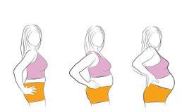Изменять тело ` s женщины во время этапов беременности также вектор иллюстрации притяжки corel бесплатная иллюстрация