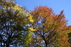 изменяя листья Стоковое Изображение