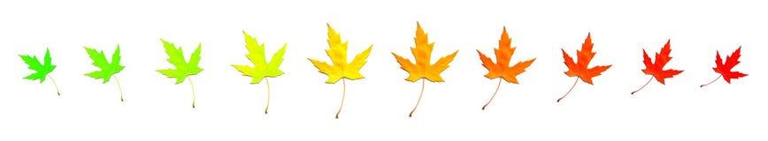 изменяя листья цвета Стоковая Фотография