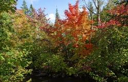 Изменяя цвет листьев в падении Стоковая Фотография RF