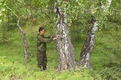Измерять диаметр дерева Стоковое Изображение RF