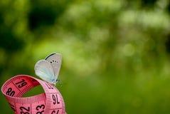 Измеряя лента розового цвета, на ей сидит голубой близкий взгляд бабочки на запачканной предпосылке Стоковые Изображения RF