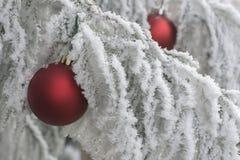 Изморозь зимних отдыхов Стоковые Изображения