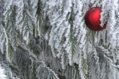 Изморозь зимних отдыхов Стоковое фото RF