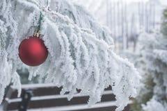Изморозь зимних отдыхов Стоковые Изображения RF